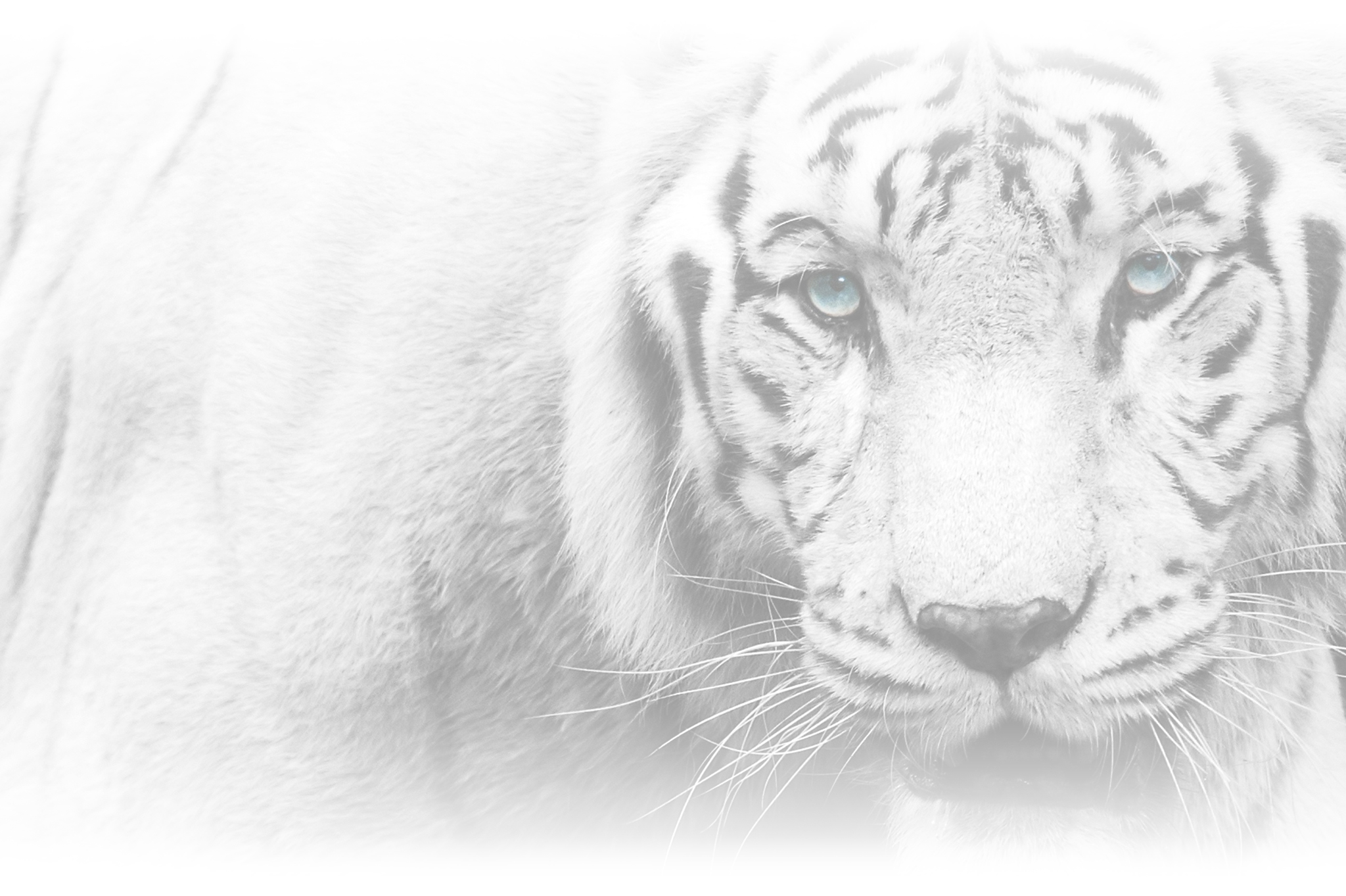 Tiger Paws Carpet & Upholstery Cleaning
