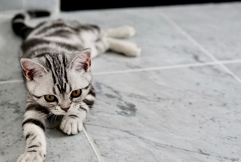Cat lounging on tile floor