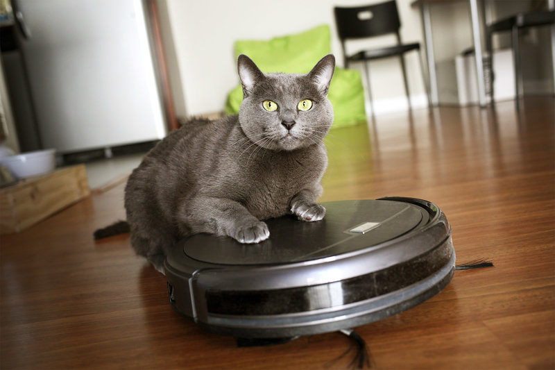cat riding robot vacuum